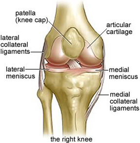 Knee AP-r